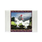 Framed Brahma Chickens Rectangle Magnet (100 pack)