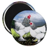 Framed Brahma Chickens Magnet