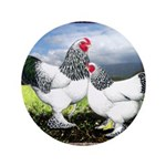 "Framed Brahma Chickens 3.5"" Button"