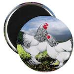 """Framed Brahma Chickens 2.25"""" Magnet (100 pack"""