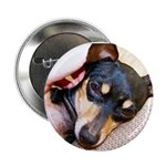 """Chi-Weenies.com 2.25"""" Button (100 pack)"""