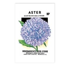 Aster Postcards (Package of 8)