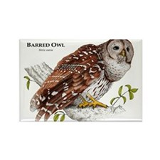 Barred Owl Rectangle Magnet
