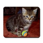 Tabby Kitten Mousepad