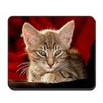 Hemingway Kitten Mousepad