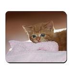 Ginger Kitten Mousepad
