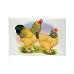 Buff Brahmas2 Rectangle Magnet (100 pack)
