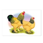 Buff Brahmas2 Postcards (Package of 8)