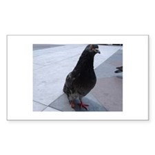One-footed pigeon Rectangle Decal