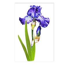 Purple Iris Postcards (Package of 8)