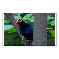 turaco Rectangle Decal