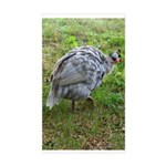 guineafowl Rectangle Sticker