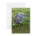 guineafowl Greeting Cards (Pk of 10)
