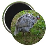guineafowl Magnet