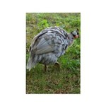 guineafowl Rectangle Magnet (10 pack)