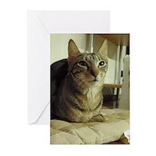 Sokoke Greeting Cards (Pk of 10)