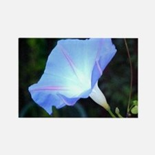 Cool Windchime morning glory flowers Rectangle Magnet