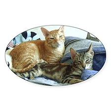 Cornish Rex & Sokoke Kitten Oval Decal