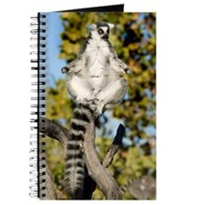 Sunning Ringtail Journal