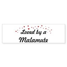 Loved By Malamute Bumper Bumper Sticker