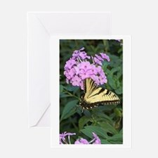 BUTTERFLY ON PHLOX Greeting Card