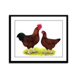 Red Broiler Chickens 2 Framed Panel Print