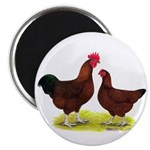 "Red Broiler Chickens 2 2.25"" Magnet (100 pack"