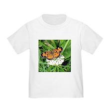 Heath Fritillary Butterfly T