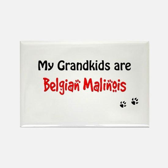 Malinois Grandkids Rectangle Magnet