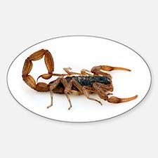Scorpion Oval Decal
