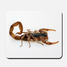 Scorpion Mousepad