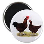 Dk Red Broiler Chickens Magnet