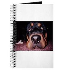 Rottie Puppy Journal