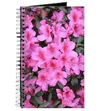Pink Azalea Blossoms Journal
