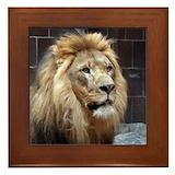 African lion Framed Tiles