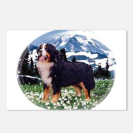 Cute Berner Postcards (Package of 8)
