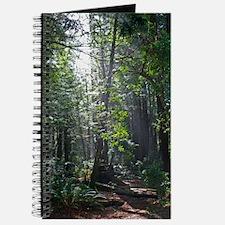 Sunlight through the Redwoods Journal