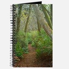 Hiking through the forest I Journal