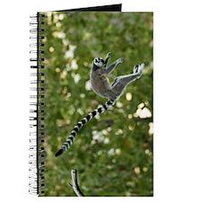 Lemur Jump Journal