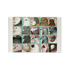 Twenty Pigeon Heads Rectangle Magnet (10 pack)