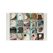 Twenty Pigeon Heads Rectangle Magnet