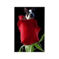 Red Rose Boston Terrier Rectangle Magnet