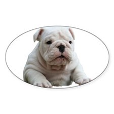 British Bulldog Oval Decal