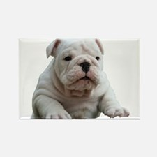 British Bulldog Rectangle Magnet
