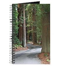 A drive through Richardson's Grove Journal