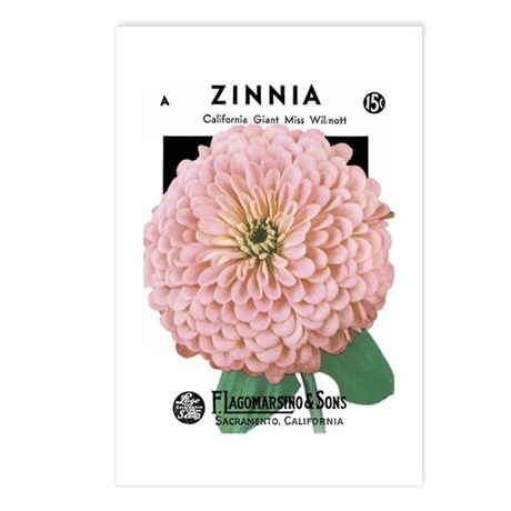 Zinnia Postcards (Package of 8)