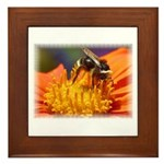 Pollination Framed Tile
