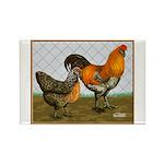 Barnyard Ameraucanas Rectangle Magnet (100 pack)