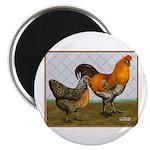 """Barnyard Ameraucanas 2.25"""" Magnet (100 pack)"""