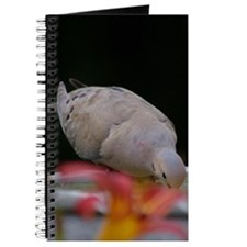 Mourning Dove Journal